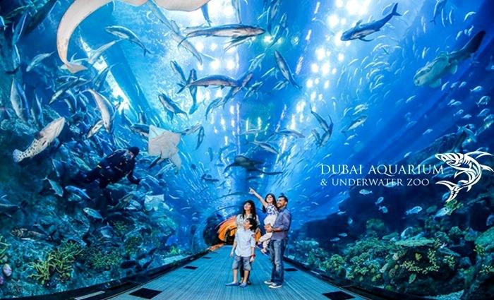 Dubai Aquarium & Underwater Zoo Resercher Ticket