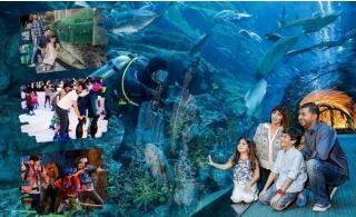 4 in 1 Combo Offer: Dubai Aquarium & Underwater Zoo + VR Theme Park Super 7 + Ice Rink Tickets