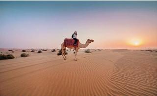 4x4 Land Cruiser Home Pickup & Dropped Evening Desert Safari at Arabian Guide UAE