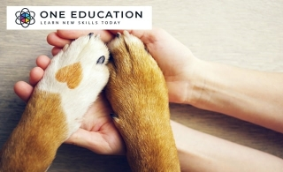 Are you a pet lover? Want to know more about the jobs available that are perfect for individuals with a love of animals? Enrol in Animal Care and Psychology online course for only AED 29 from Edukators London.