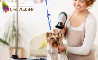 Animal Grooming Online Course from International Open Academy for only AED 29.