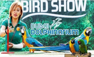 Exotic Bird Show Tickets at Dubai Dolphinarium.