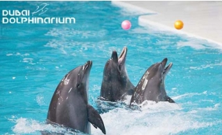 Dolphin & Seal Show Regular Tickets starting from AED 35.