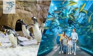 Dubai Aquarium & Underwater Zoo plus Penguin Cove Tickets.