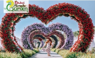 Miracle Garden Ticket with Transportation (Pick-up & Drop Off).