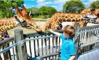 Dubai Safari Park Tour with Pick-up & Drop Off.