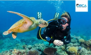 Try out  2 hours diving session with no experience, underwater photos included at Orca Diving Center at AED 299.