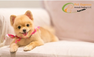 Get your furry companion groomed at Pet Express Animals Trading from AED 85 only! Grooming service available for cats, small and big dogs