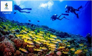 180 Minutes Scuba Diving At Fujairah From Paradise Diving & Swimming Club For AED 220 including boat trip . Underwater Pictures and Videos Included.