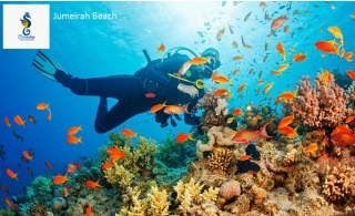 150 Minutes Scuba Diving at Jumeirah Beach from Paradise Diving & Swimming Club for AED 169. Underwater pictures and videos included.