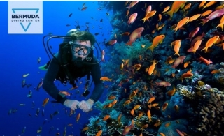 Try Scuba Diving Tour package with FREE Paddle Boarding, Snorkeling and Free Pick-up by Bermuda Diving Center, for AED 299.