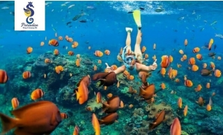 Snorkeling Trip in Fujairah from Paradise Blue Diving & Snorkeling Center.